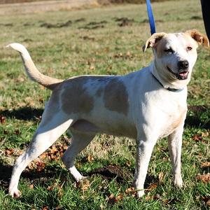 adopter un chien Gaia