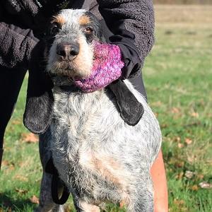 adopter un chien senior Hercule