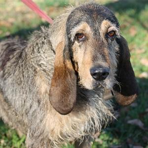 Adopter chien senior