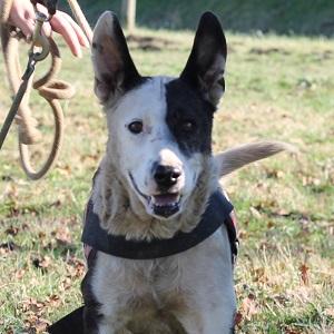 adopter un chien senior Lolie