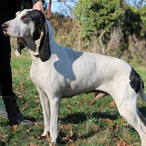 adopter un chien Paulo
