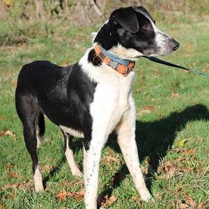 adopter un chien Pilou