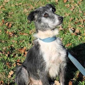 adopter un chien senior lou